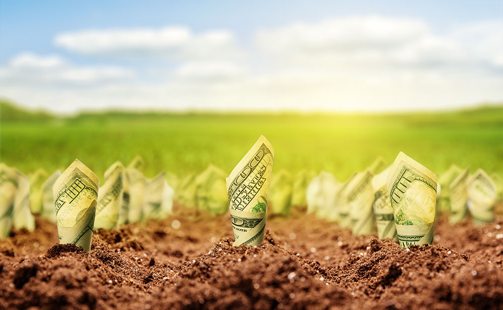 photo illustration of rolled up money growing out of fresh soil like sprouts