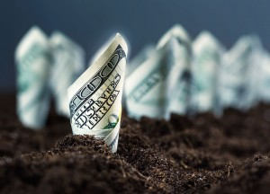 photo illustration of money growing in rows in some dirt